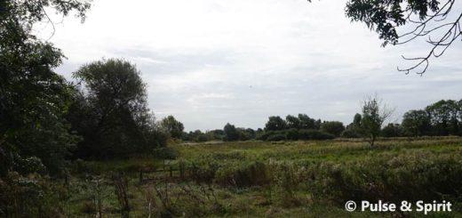 Cambridge Grantchester Meadows