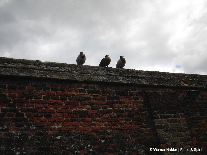 Ducks on the Wall London 15.5.2011