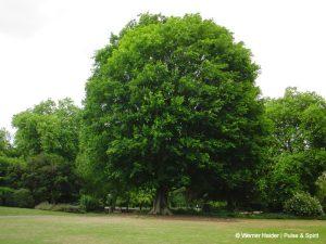 London Hyde Park 15.5.2011